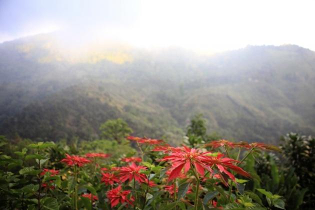 Armonia Ambiental (Hospital tourism) Providencia, Dota 1.710m Forest Reserve, Los Santos, Costa Rica 2016