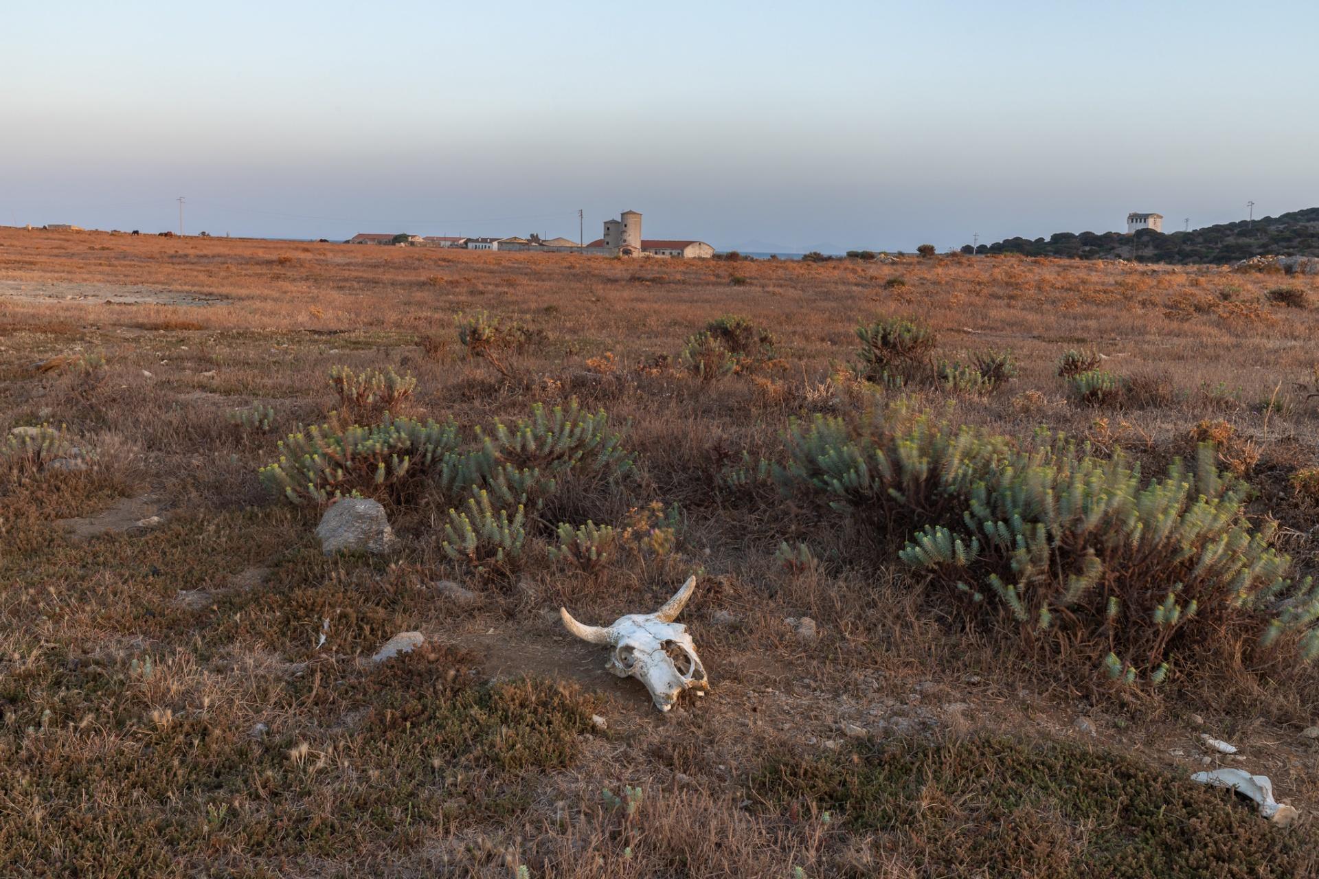 Asinara, localiltà Campu Perdu, E' un progetto fotografico che racconta la località di Campu Perdu, nell'isola dell'Asinara, in Sardegna