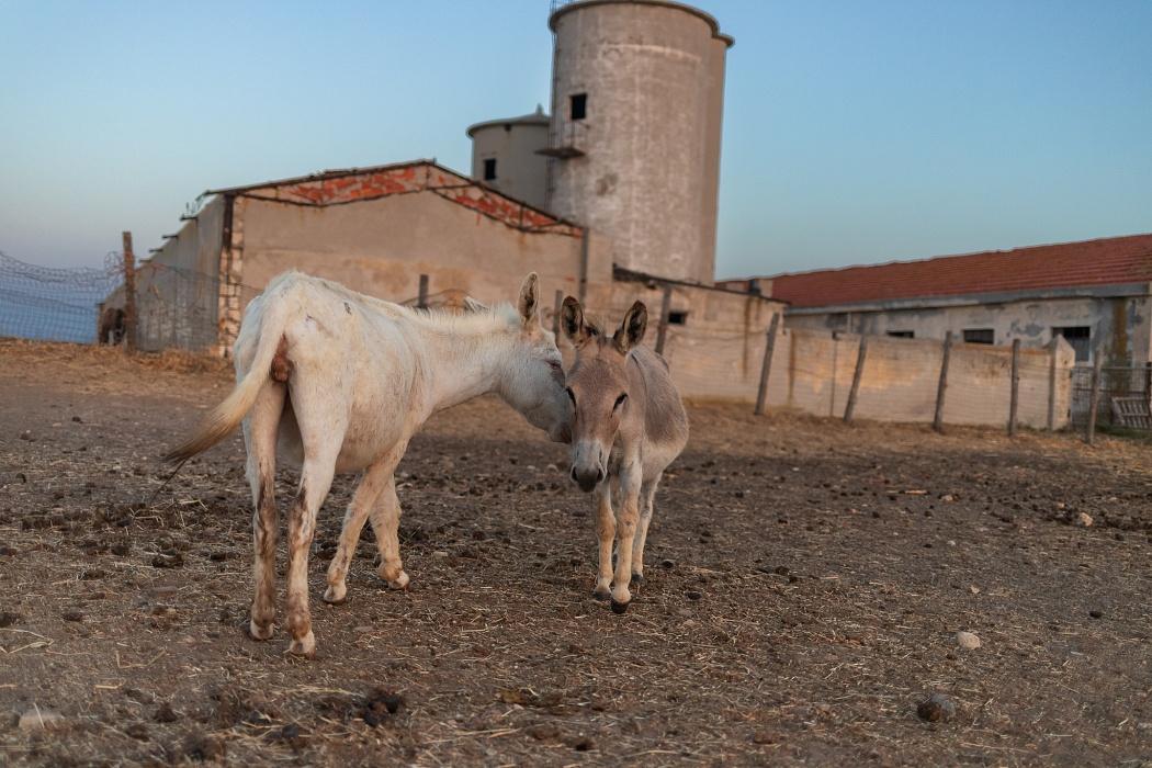 Asinara, localiltà Campu Perdu