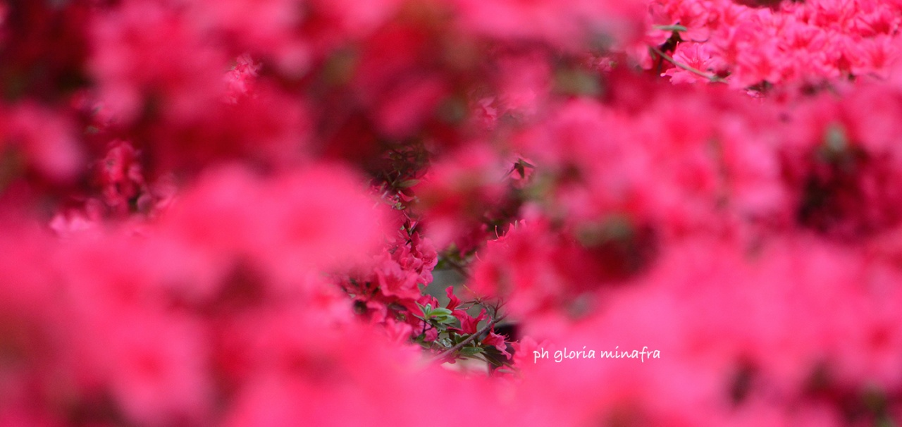 © Gloria Minafra - gloriaminafra.it