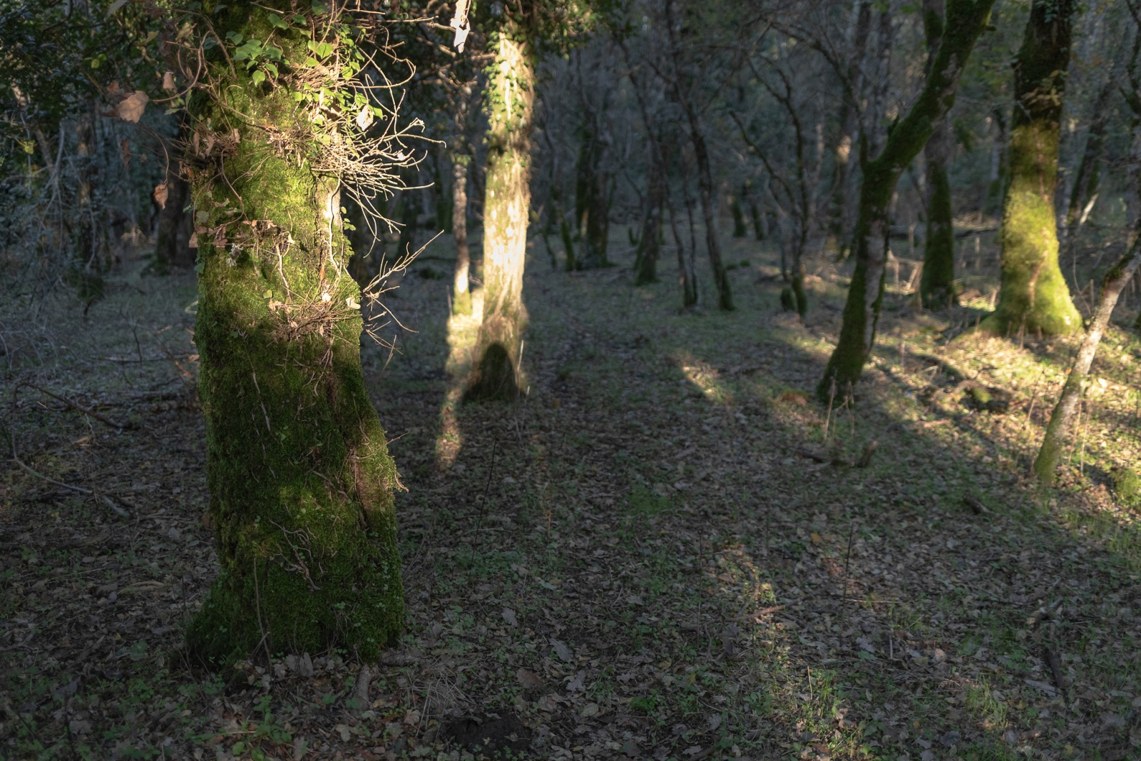 Lecci - Badde Salighes, Bolotana