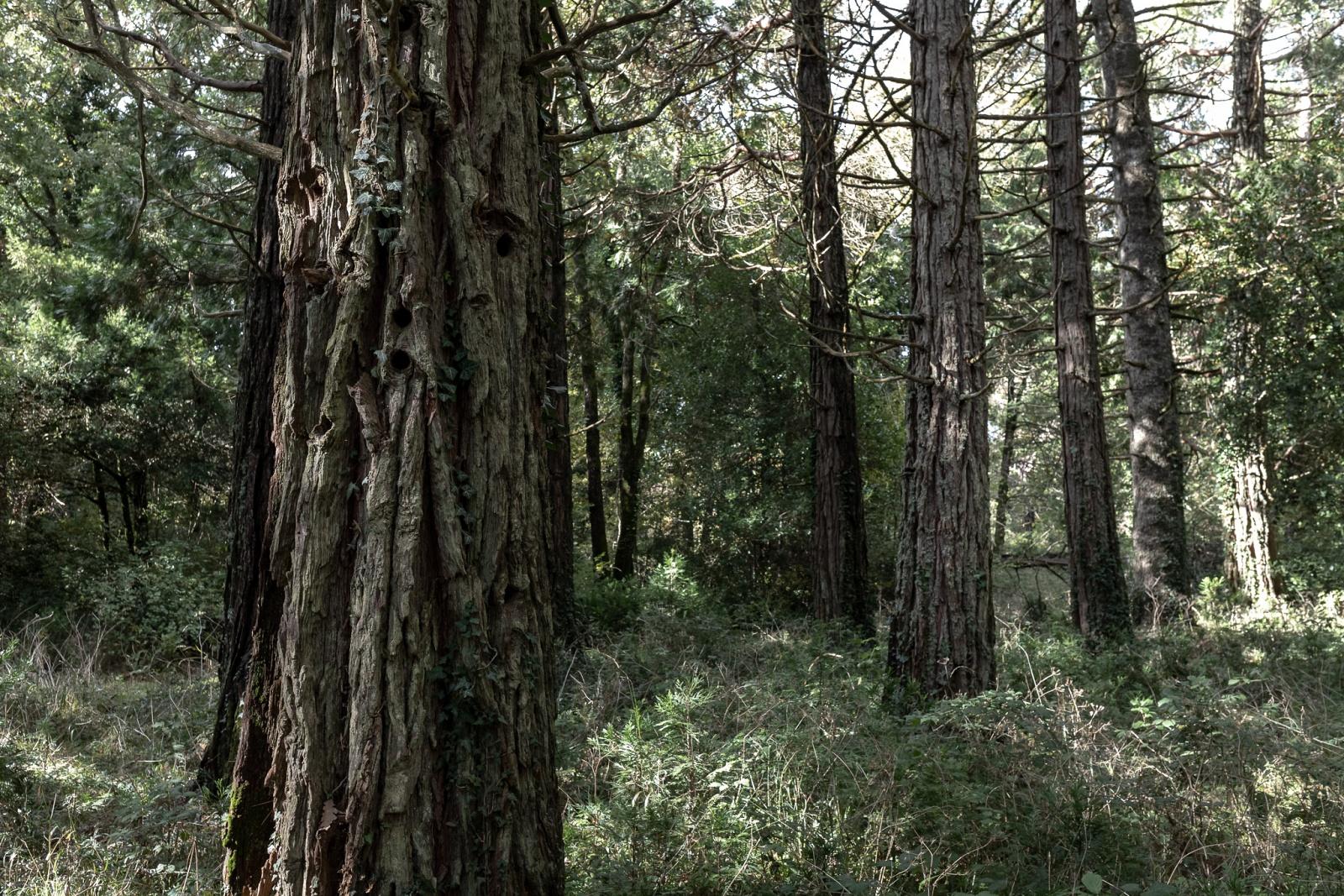 Sequoie - Badde Salighes, Bolotana