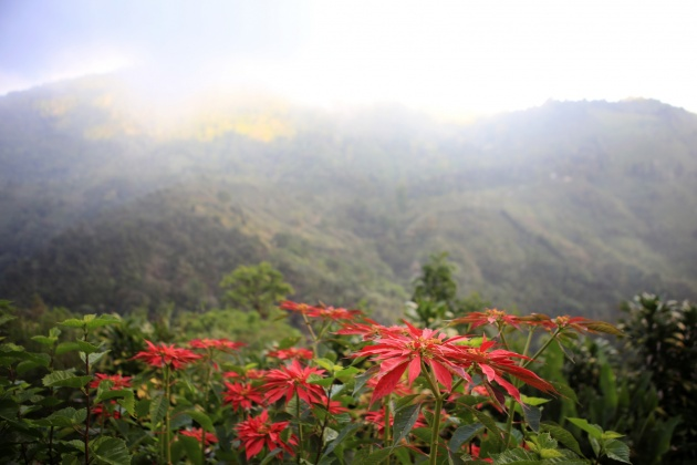 Armonia Ambiental ( Hospital Tourism) Providencia, Dota 1.710m Reserve, Los Santos Costa Rica 2016